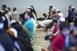 هجوم ارهابي استهدف مصلين في مسجد بكندا