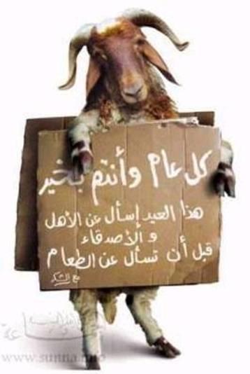 ���� ��� ������ ���� ����  ��������:sheep.jpg ���������:11 ��������:21.0 �������� �����:1035